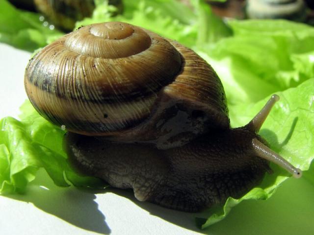 Моллюски из Адлера, помогите определить