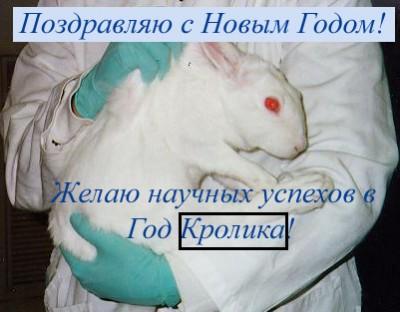 rabbit2011.jpg