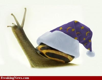 wizard-snail-34844.jpg